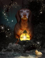 A Beautiful Little Dog Named Pumkin by KarinClaessonArt