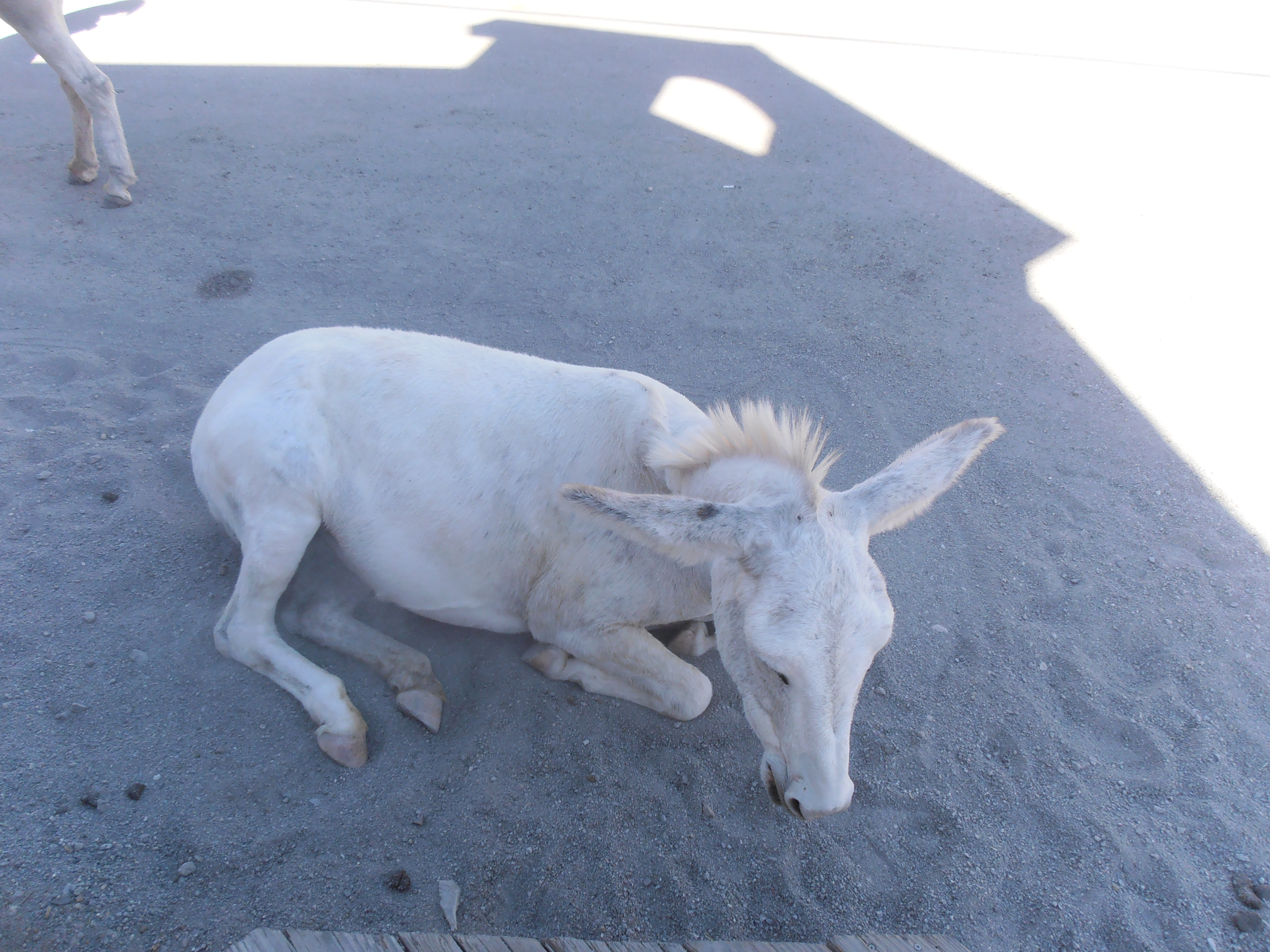oatman chat Browse and compare cars for sale near oatman, az 86433 from local dealers and private sellers.