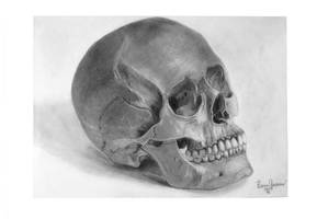 Skull study drawing I by KarinClaessonArt