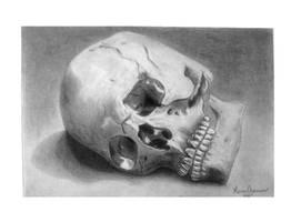 Skull study drawing II by KarinClaessonArt