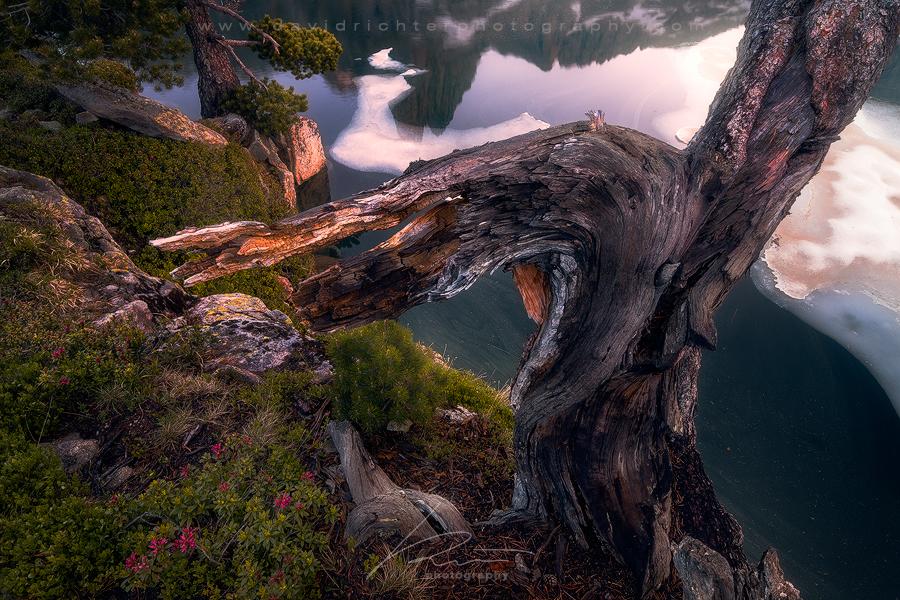 Puzzled  - Aiguestortes National Park, Spain by davidrichterphoto