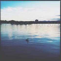 Swan Lake by sexxylilladybug