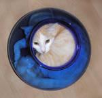 cat in the jar