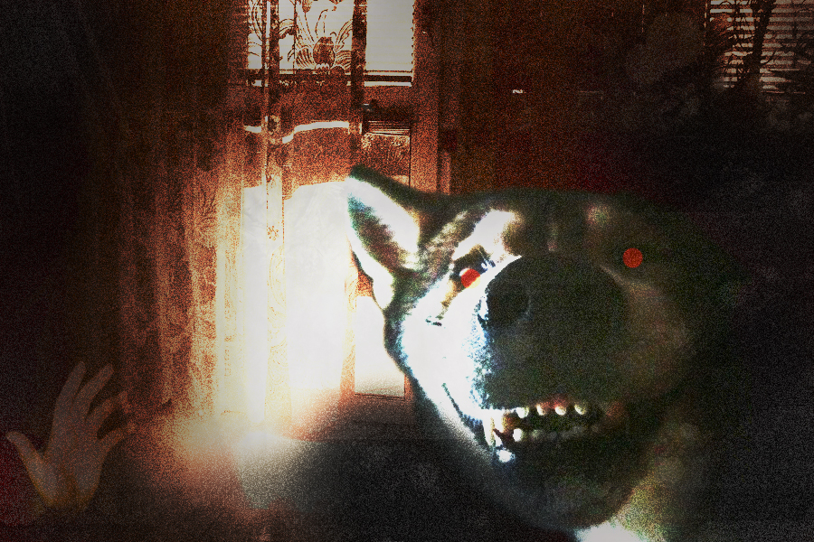 Original Smile Dog Real