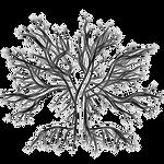 Frozen Night Symbolic Logo 2 by FrozenNightingale