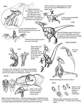 Raptor Tutorial