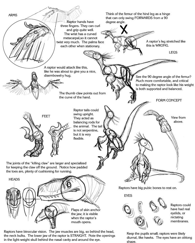 Raptor Tutorial by Droemar