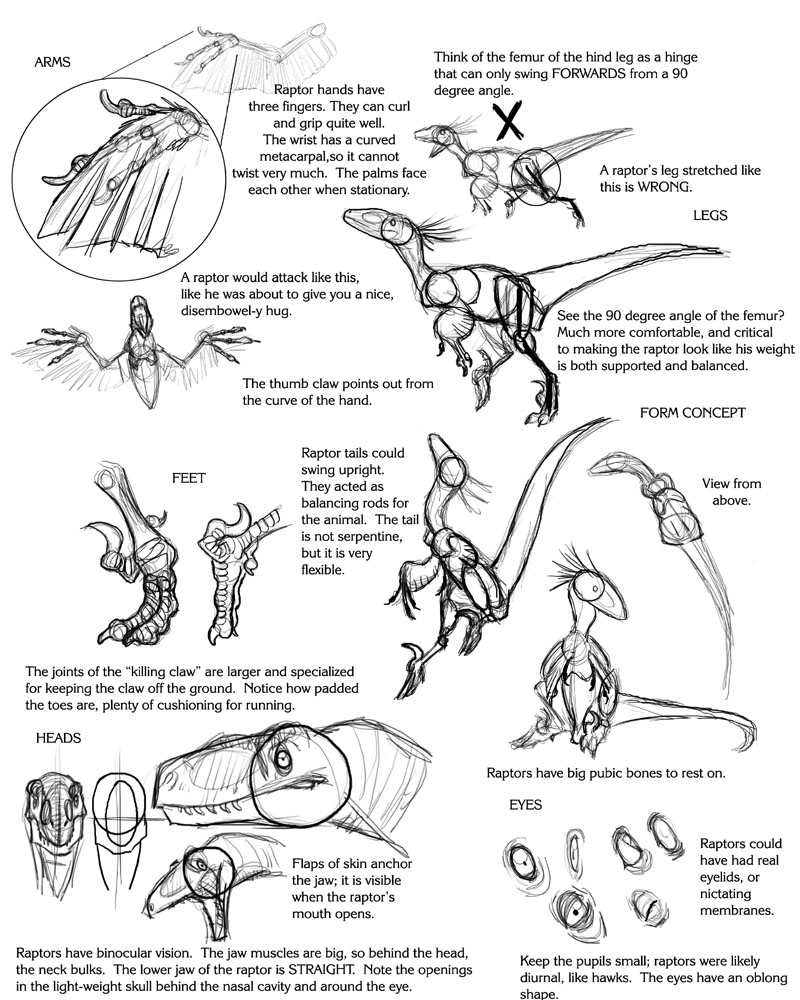 Raptor Tutorial