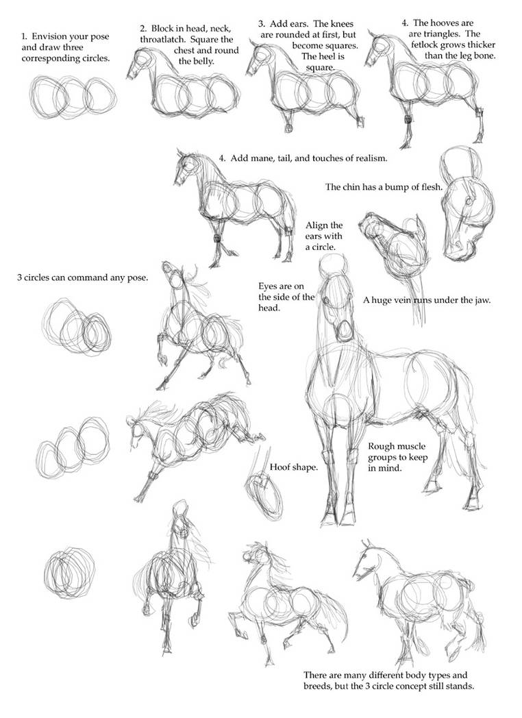 This is a picture of Unusual Horse Legs Drawing