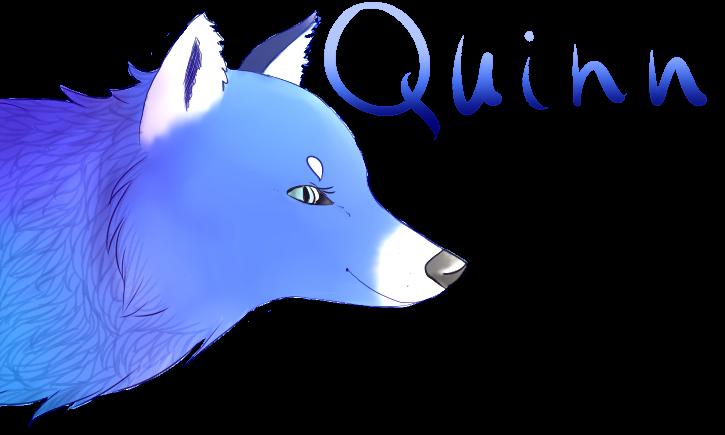 Quinn by Avantez