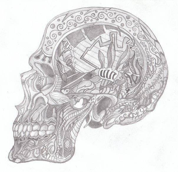 Skull Anatomy Study By Phoam5000 On Deviantart