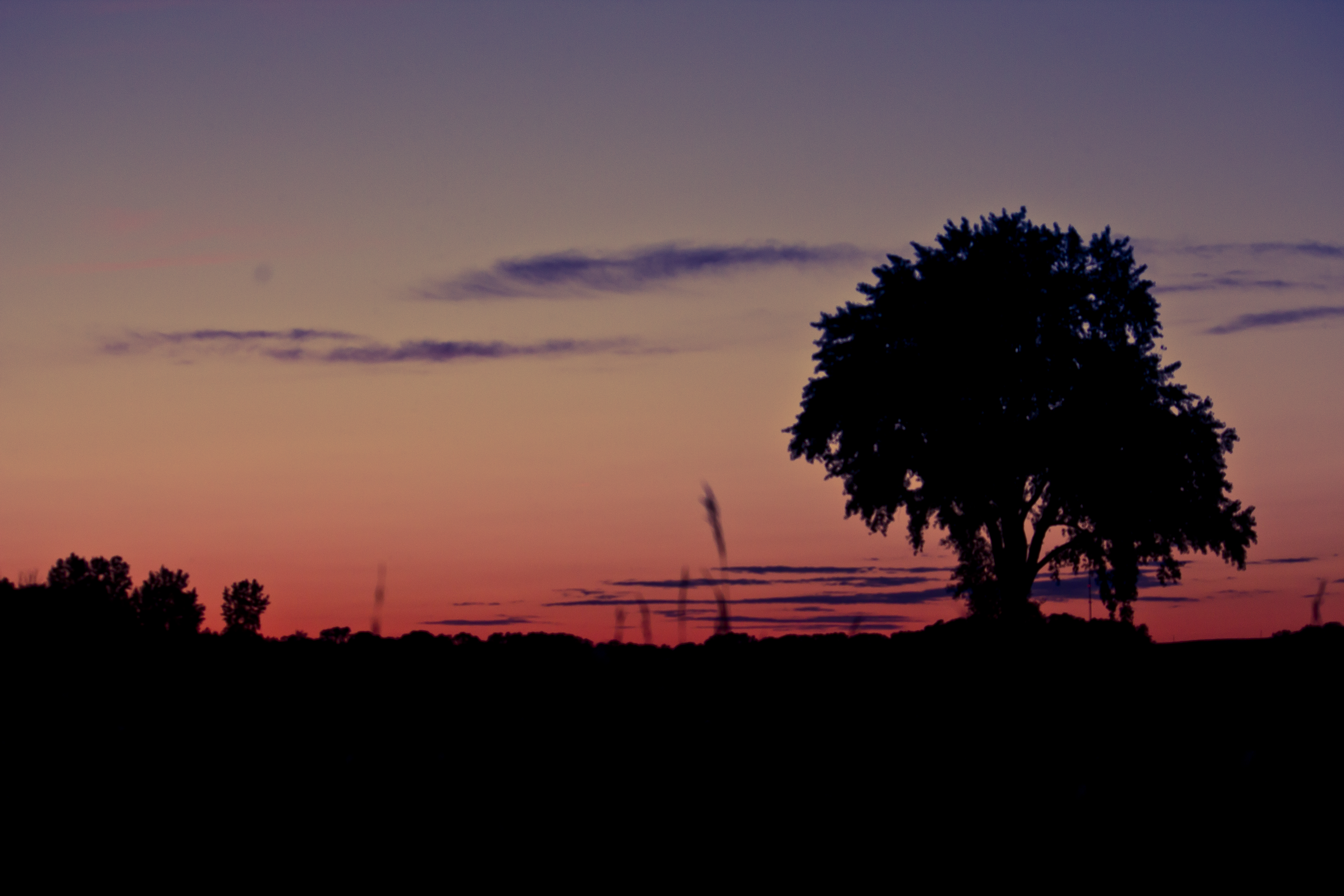 Tree Silhouette At Sunset By Archangelical Stock