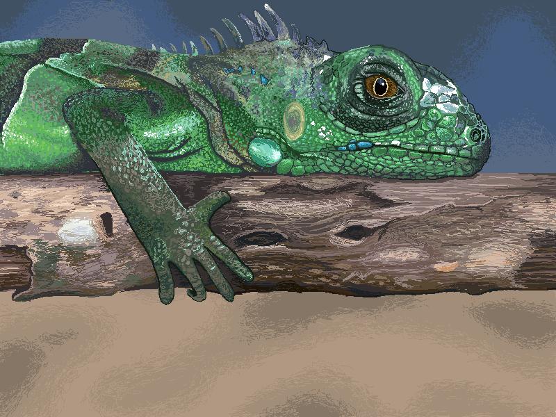 Iguana by cherrybubblegum