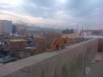 Cat 3 by xxqasimxx