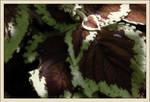 texture. dark foliage