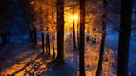 Wintersun #1