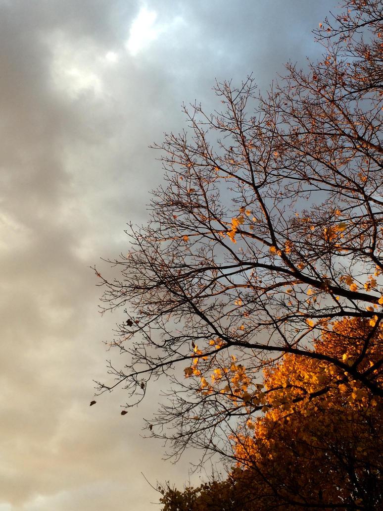 Mid Autumn by StarlightOrchard