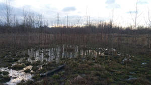 Swampness