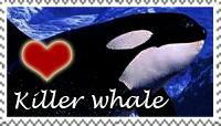 Killer Whale Love Stamp by PetLovers