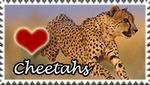 Cheetah Love Stamp by PetLovers