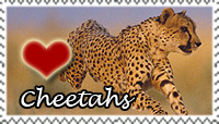 Cheetah Love Stamp by PetLovers