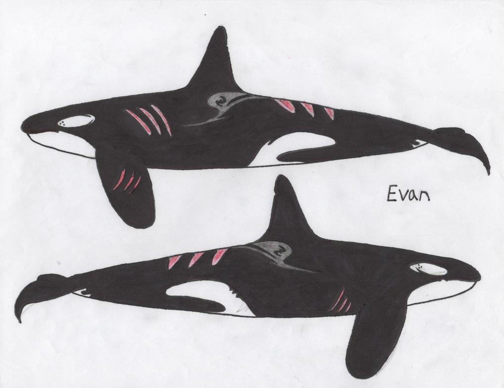 Evan by Orca2013