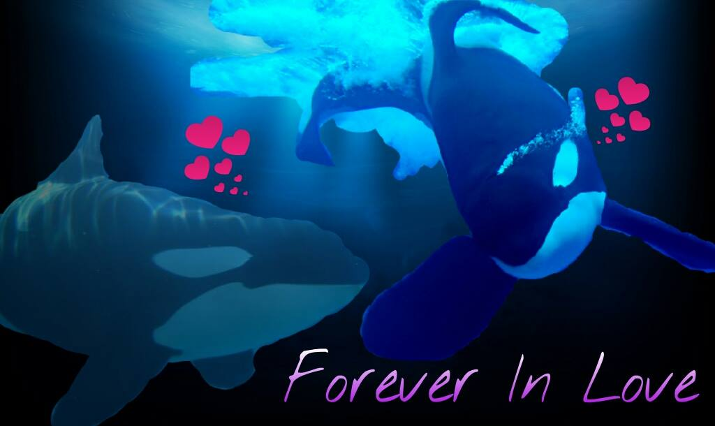 Tilikum and Taima: Forever In Love by Orca2013