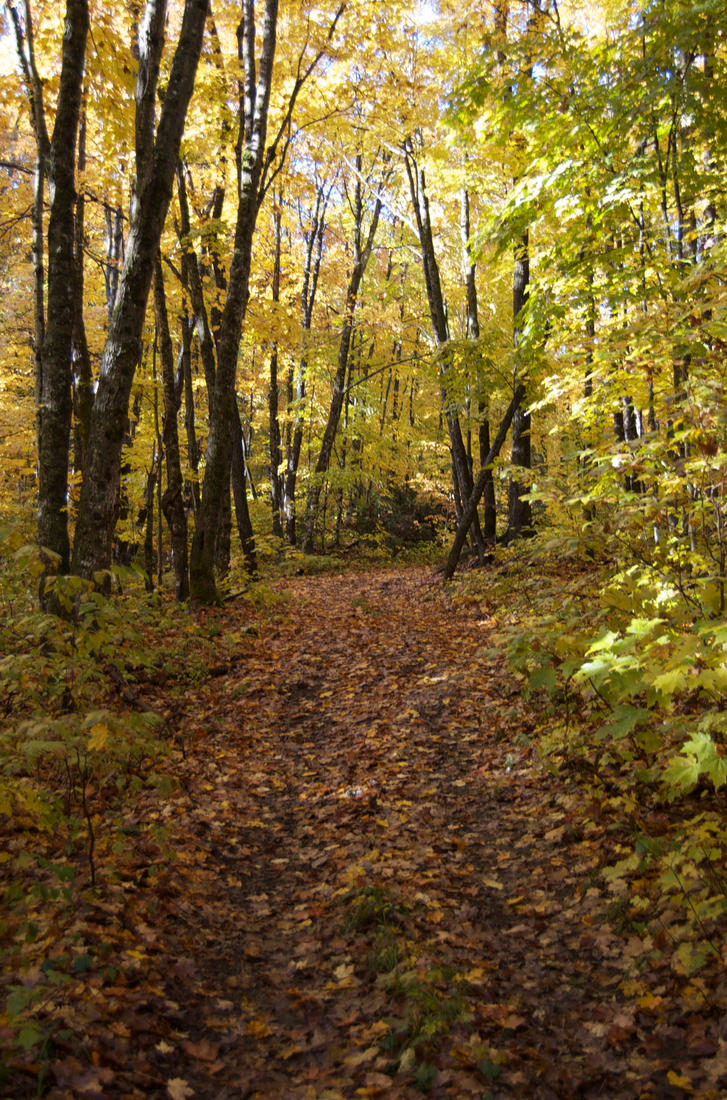Forest Trail by odhinnsrunes