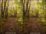 Forest Trail 3D