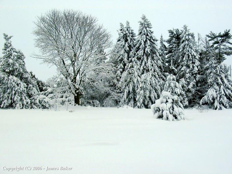 Snow Scene by odhinnsrunes