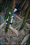 Under the bamboo tree
