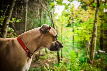 Dog1 by wapel