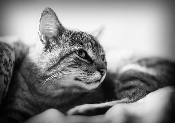 Cat1 by wapel