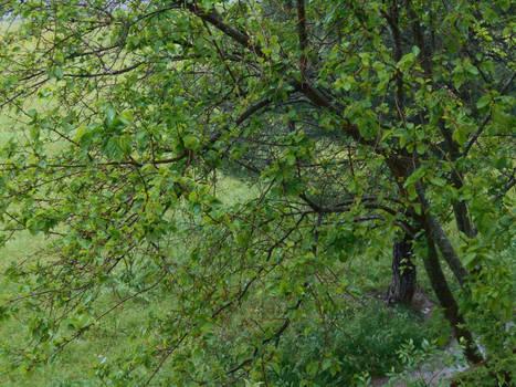 Rainy Spring II