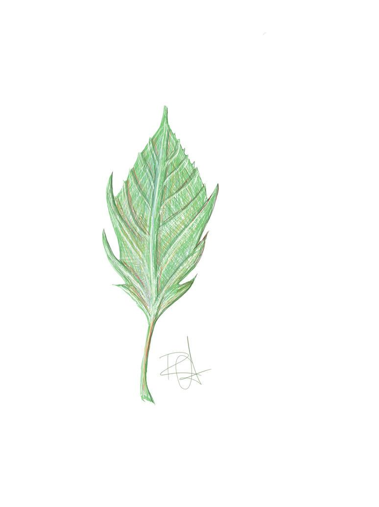 Leaf by grymmjack