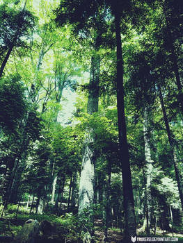 Some random forest in my country