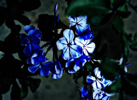 Hidden blue