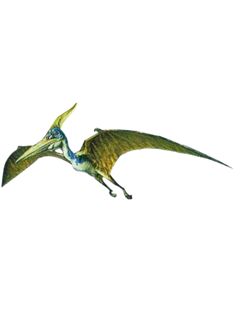 PTERANODON by TOPSHOP-MAN on DeviantArt