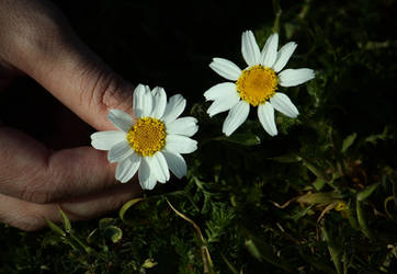 whitecouple by srmrt