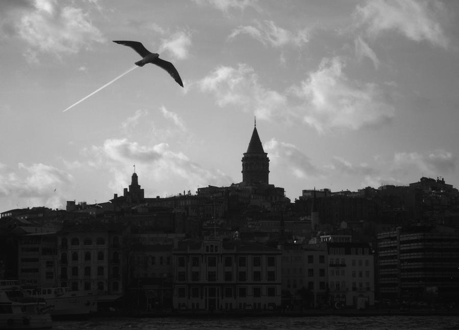 birdish airlines by srmrt