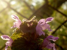 Sunshine by Zaginionanana
