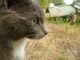 Cat by Zaginionanana