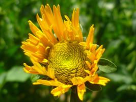 Yellow Flower by Zaginionanana