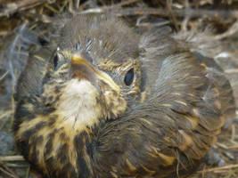 Young bird by Zaginionanana