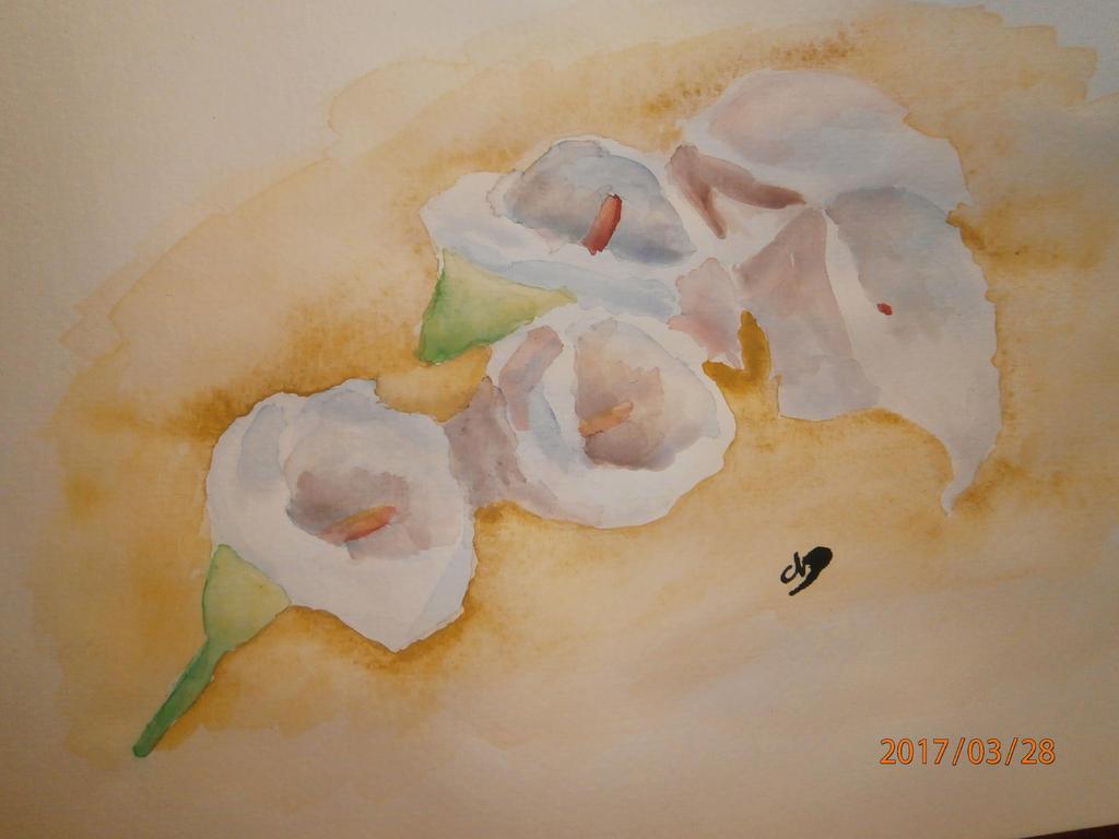 Calla by talisath