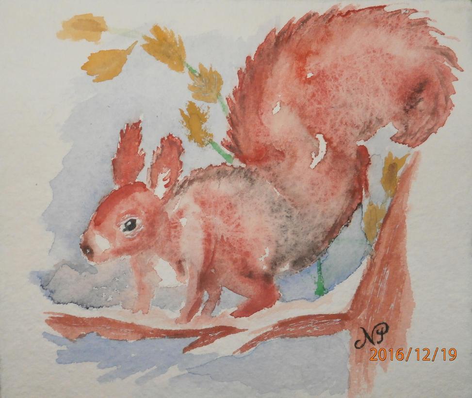 Squirrel by talisath