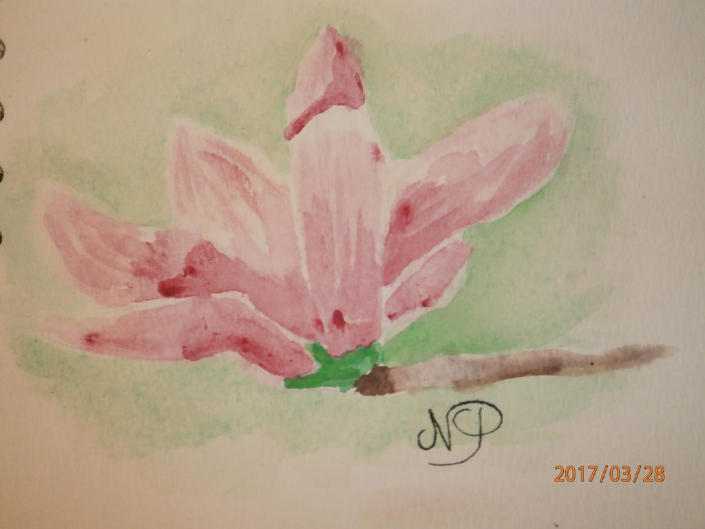 Magnolia by talisath