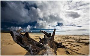 beach wood by OfirAbe