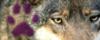 Confirmación élite El Monte del Lobo Elmonte100x40_by_gominola1607-d6tzkz5