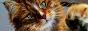 Confirmación élite Warrior Cats Spain Litlafilliate_by_gominola1607-d75g84u